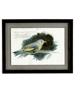 """Yellow-Bellied Flycatcher"" Giclee"