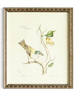 Tennessee Warbler Print