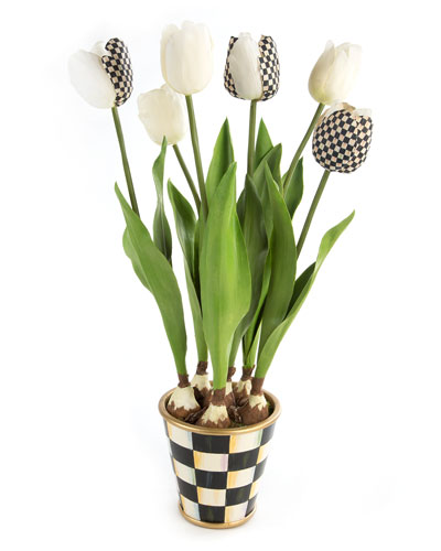 Courtly Check Potted Tulips