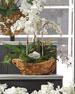 White Orchid Faux-Floral Arrangement in Wooden Bowl
