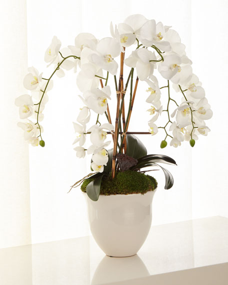 Abstract Orchids Arrangement