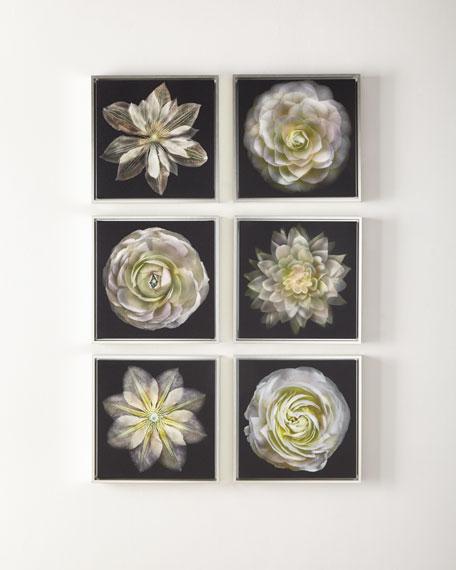 Fleur en Noir, Set of 6