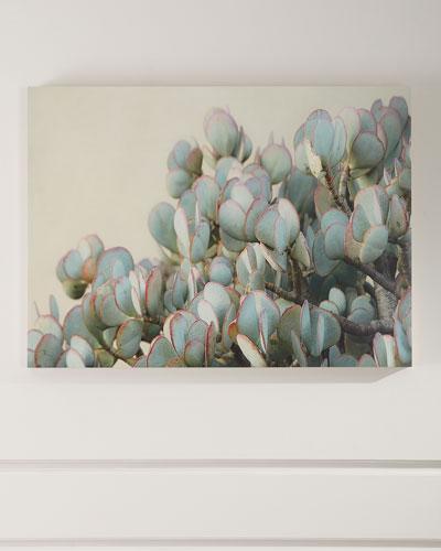 Succulent 2 Photograph Print on Maple Box Art