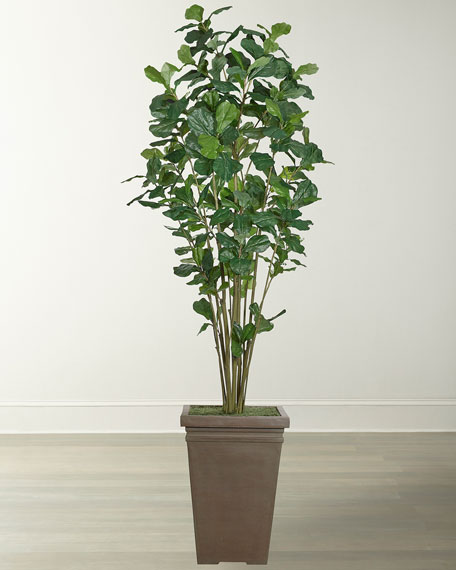 Fiddle Leaf Tall Tree Tall in Square Ant Clay Planter