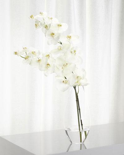 Orchid Phalaenopsis Floral Arrangement