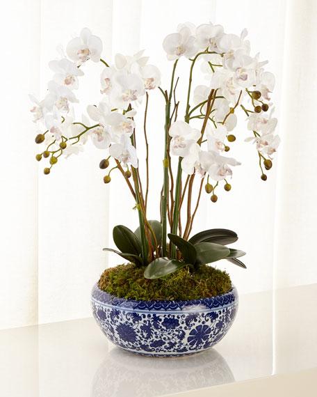John-Richard Collection Delft Orchid Garden
