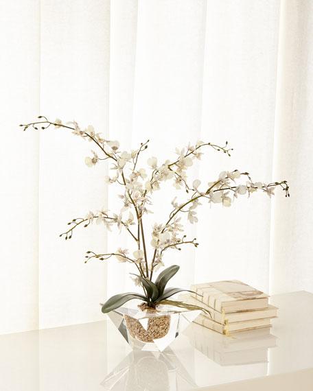 Marquis Orchid Arrangement