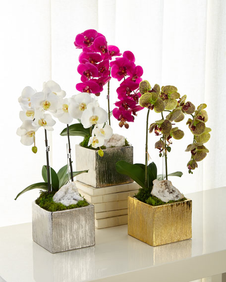 Orchids in Square Containers