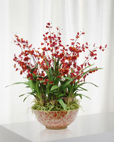 Oncidium Orchid in Long Life Bowl