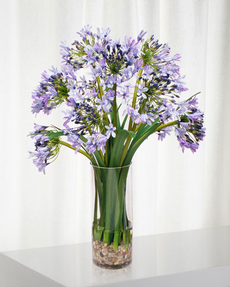 Agapanthus in Glass Vase