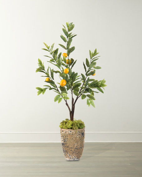 Lemon Tree in Cement Planter