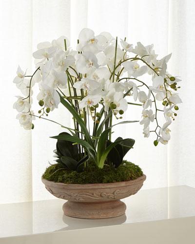 Irresistible Phalaenopsis Arrangement