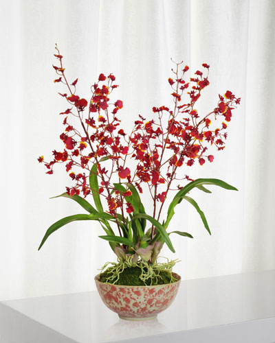 Orchid in Longlife Bowl