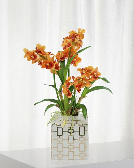 Vanda Orchid in Planter