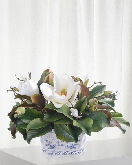 Magnolia in Pot