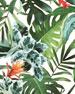 Rainforest Removable Wallpaper