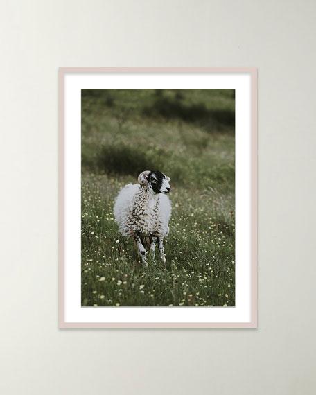 """Sheep"" Giclee Art by Annie Spratt"