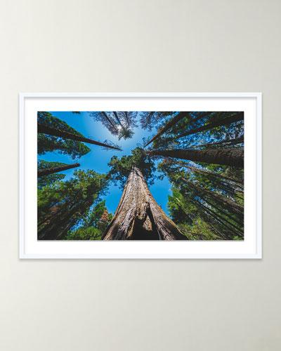 Treeees (Mariposa  CA) Giclee Art by Brannon Naito