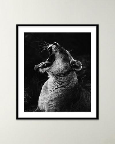Safari Lion II Photo by Isabella Juskova
