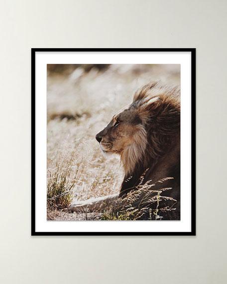 """""""Lion III"""" Photo by Isabella Juskova"""