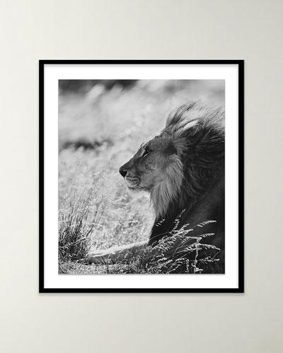 Lion III Black & White Photo by Isabella Juskova