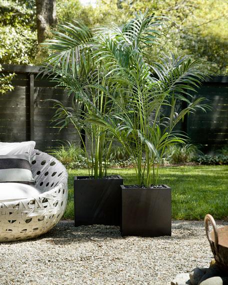 NDI Kentia Palm in Matte Black Cube