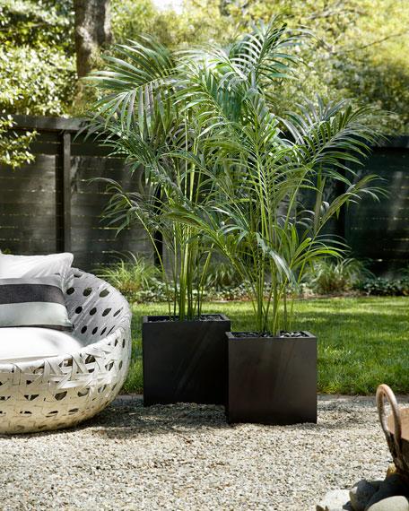 Kentia Palm in Matte Black Cube