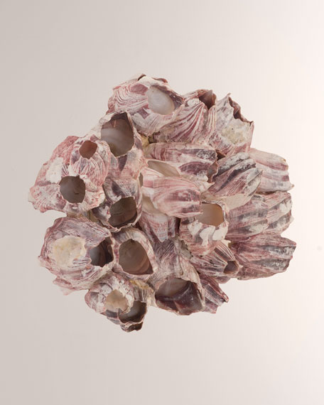 Barnacle Cluster Large Wall Art