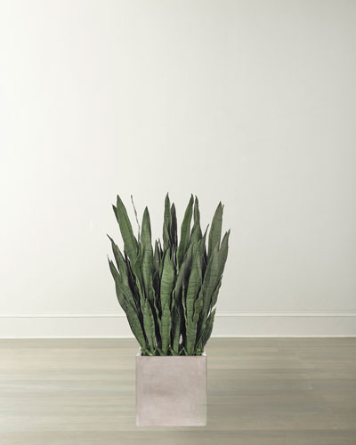 Sansevieria in Concrete Finish Cube