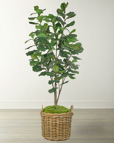 Fiddle Leaf in Rattan Basket
