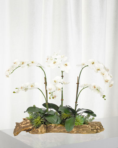 White Orchid Succulent in Wood Planter