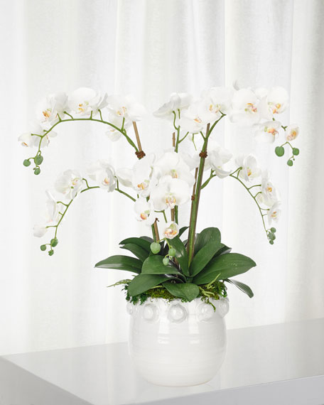 White Orchid Phalaenopsis in White Pot