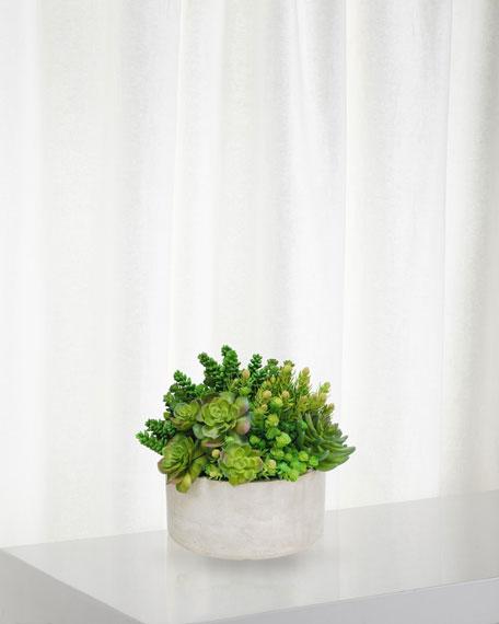 Succulent in Garden Planter
