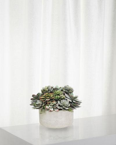 Mix Succulent in Garden Planter