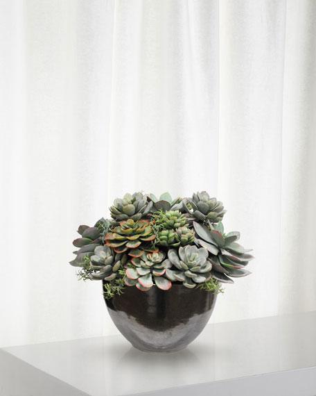 Mix Succulent in Ceramic Bowl