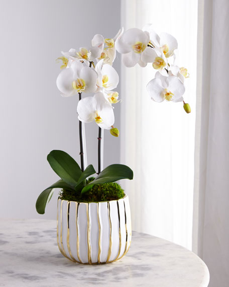 White Orchid in White/Gold Pot