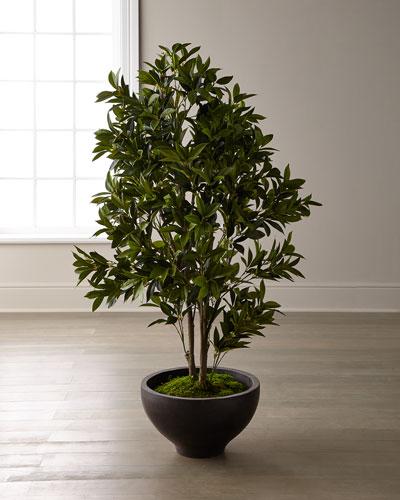 Laurel Bush Tree