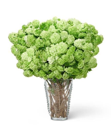 AERIN Lattea Large Vase