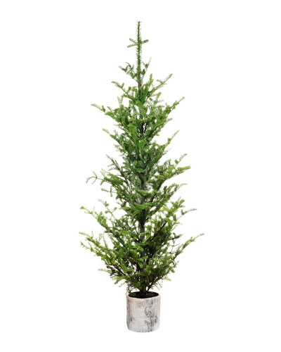 86 Potted Pine Tree