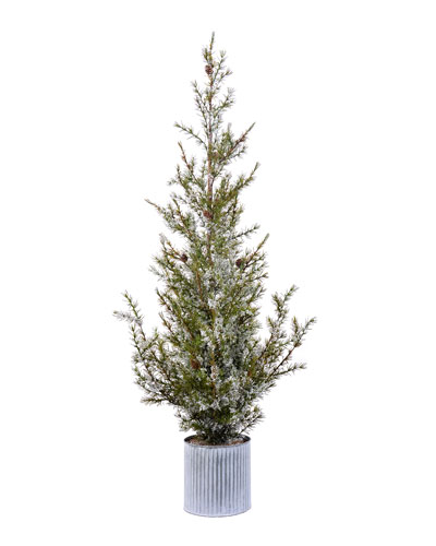 49 Green/White Potted Ponderosa Pine