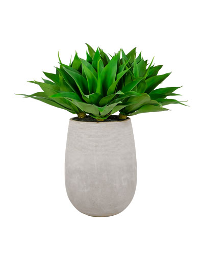 36 Aloe in Stonecast Planter
