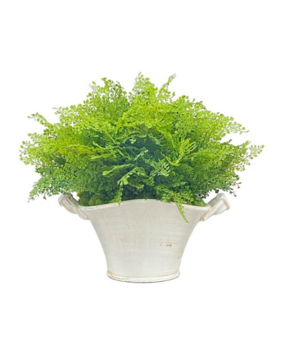Spring Fern in Planter