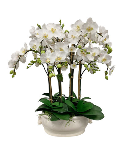 Orchid in Oval Cache Pot