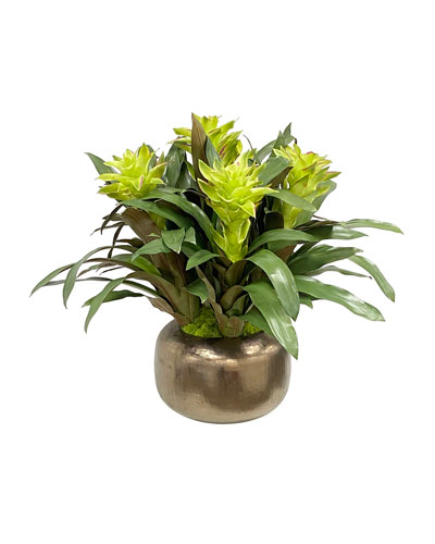 Bromeliad Floral Arrangement in Artisanal Pot