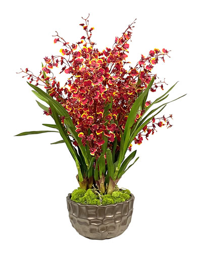 Dancing Orchid in Modern Bowl