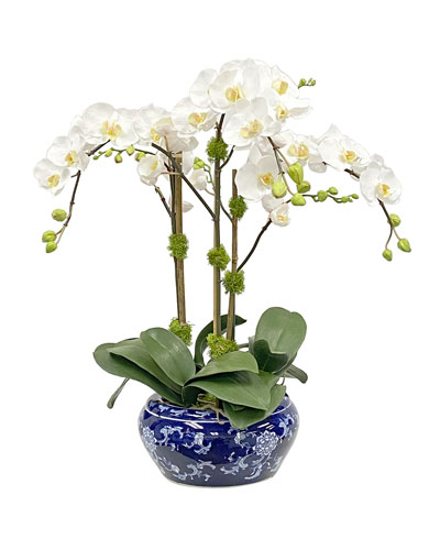 Orchid in Fish Bowl