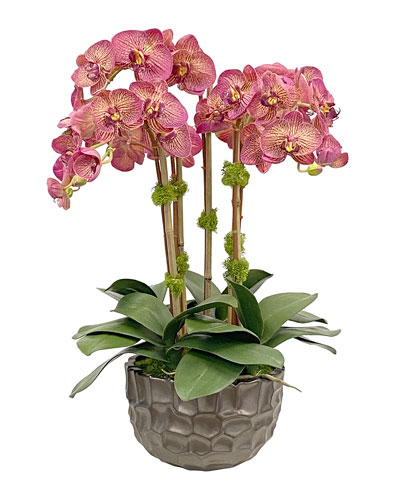 Orchid in Modern Bowl