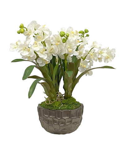 Vanda Orchid in Bowl