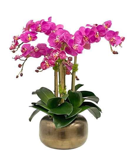 Orchid in Artisanal Pot