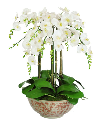 Orchids in Long Life Bowl